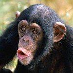 Monkey Making Dance Music