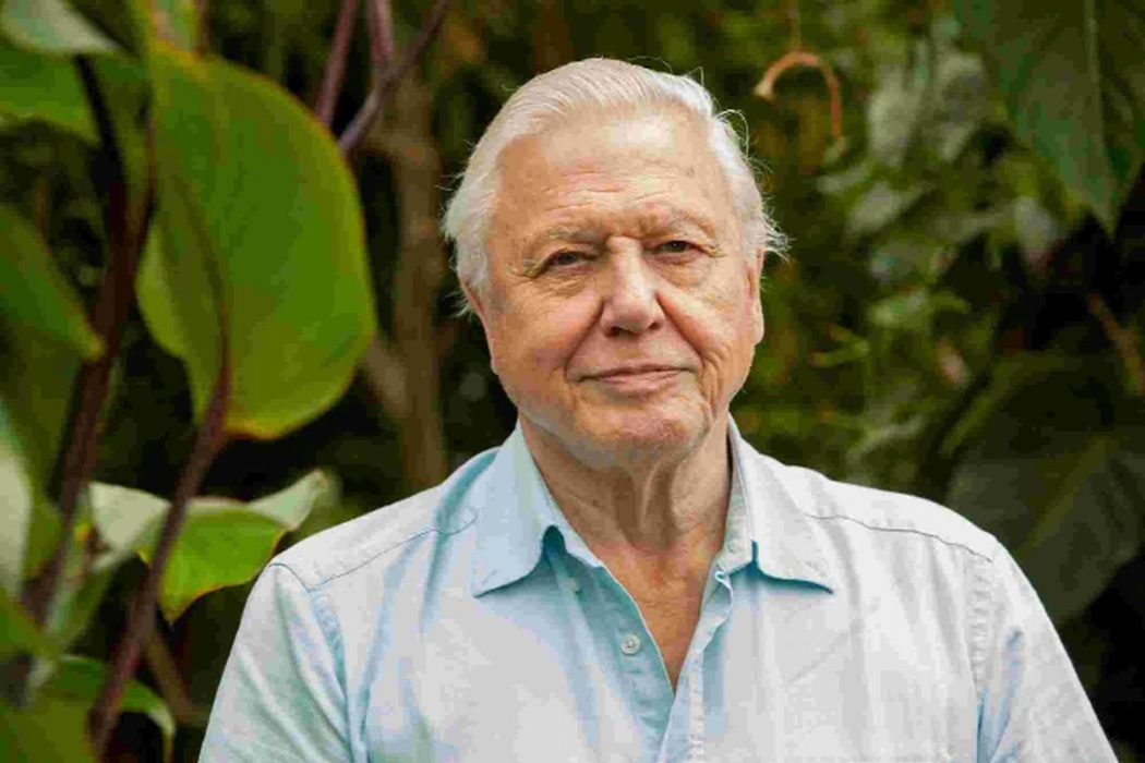 Sir David Attenborough Lashes Out At The Lack Of Any Good
