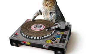 Kitten to headline tomorowland